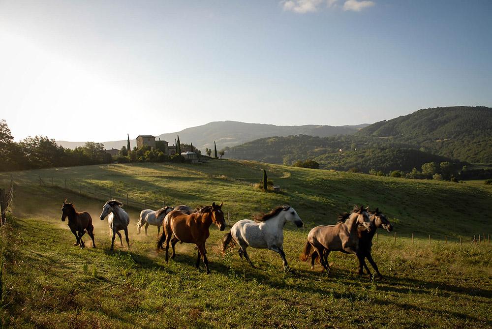 Castle in Umbria hotel and wedding retreat horses